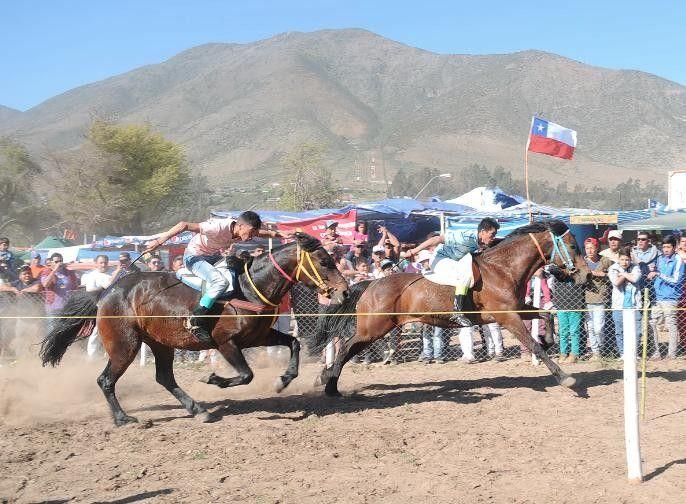 Las Carreras a la Chilena es una disciplina ecuestre típica del campo Chileno
